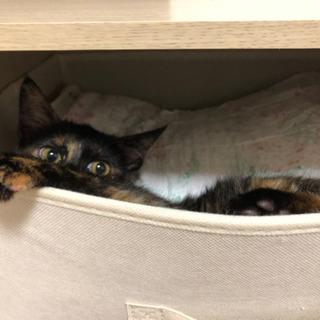 とっても可愛いサビ猫ちゃん − 福岡県