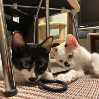 生後4ヶ月程の子猫2匹⑤9月2日更新