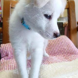 ②☆仔犬2ヶ月♪元気いっぱい可愛い男の子です♪