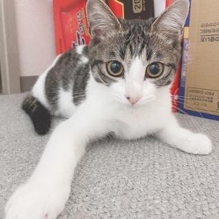 助けてください😿推定5ヶ月の男の子 - 猫
