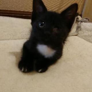 応募ストップさせていただきます。片眼だけど幸せにしてほしい💓甘えん坊の黒猫 - 猫