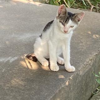 生後4ヶ月位の野良の子猫 - 取手市