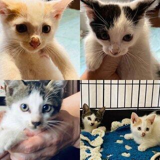 家族が決まりました!かわいい子猫3匹保護しました!生後2ヶ…