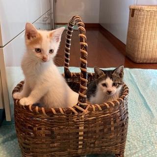 家族が決まりました!かわいい子猫3匹保護しました!生後2ヶ月ほど。 - 長生郡