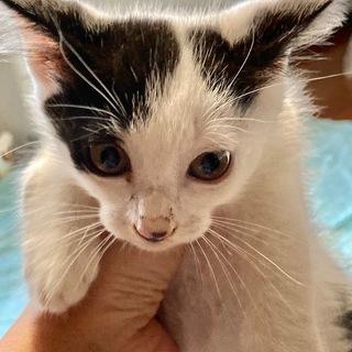 家族が決まりました!かわいい子猫3匹保護しました!生後2ヶ月ほど。 - 猫