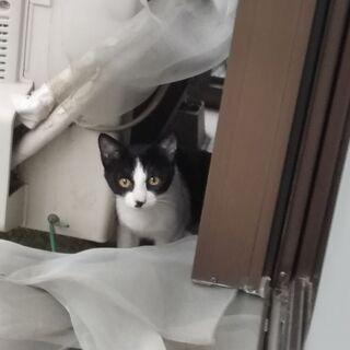 かわいい猫ちゃん - 猫