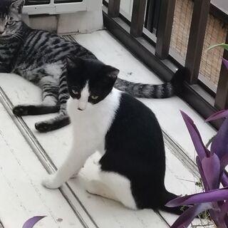 かわいい猫ちゃん − 千葉県