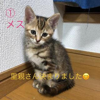 子猫3匹里親募集☆