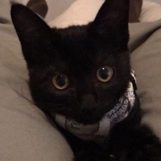 見た目も性格もかわいい黒猫の女の子です