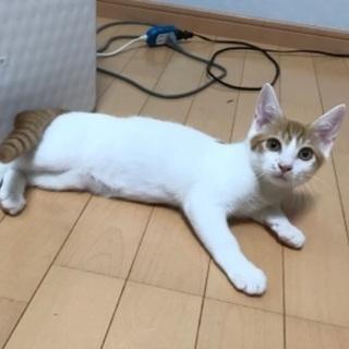 ちょっとビビリの美猫トト君