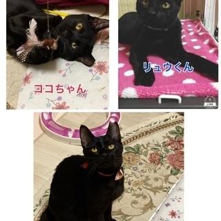 5カ月〜1歳黒猫3匹います、見て決めて下さい
