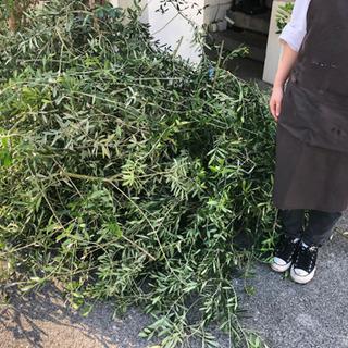 無料オリーブの切り枝