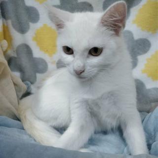 とっても穏やか白猫くん