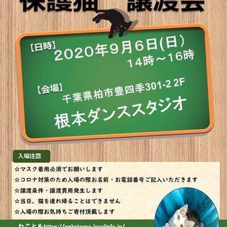 9/6(日)根本ダンススタジオ 猫カフェ風保護猫譲渡会
