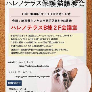 9/13(日)ハレノテラス保護猫譲渡会【完全予約制】