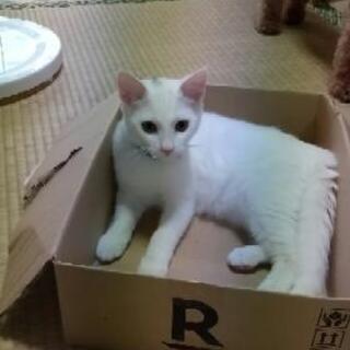 白猫の画像