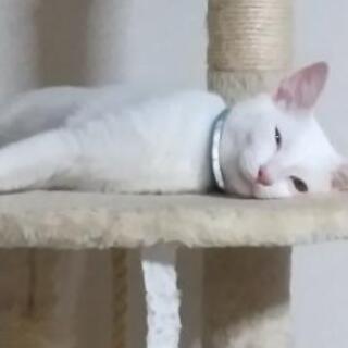 白猫 - 下関市