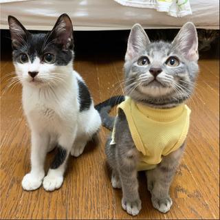 9/20⭐️譲渡会開催❣️子猫たち