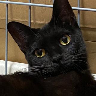 ジジそっくりな黒猫です