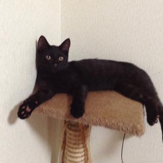 家族が決まりました☺︎【黒猫】生後4ヶ月 男の子 − 千葉県