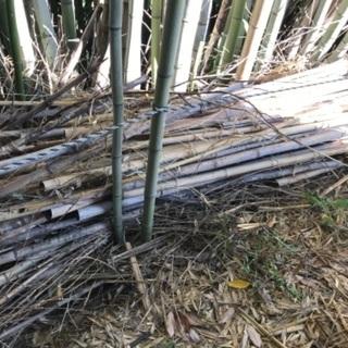 竹あげます 園芸支柱や竹垣、竹細工などにいかがですか