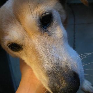15歳の老犬です。優しく接してあげられる方に!