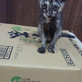 2~3ヶ月の甘えん坊猫チャン😸