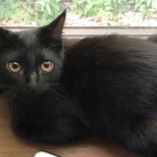 家族が決まりました☺︎【黒猫】生後4ヶ月 男の子 - 猫