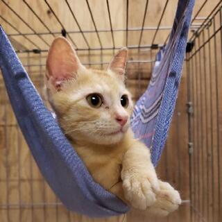 甘えん坊茶トラ - 猫