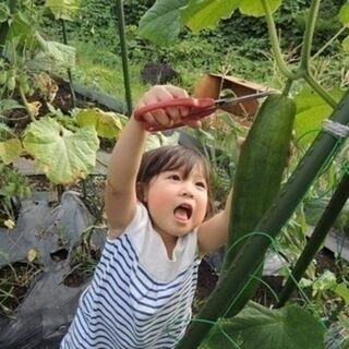 【シェア畑】お野菜栽培にご興味のある方大募集‼【多摩落川】