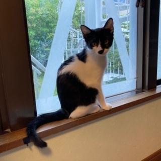 生後4ヶ月程の白黒子猫(女の子)9月6日