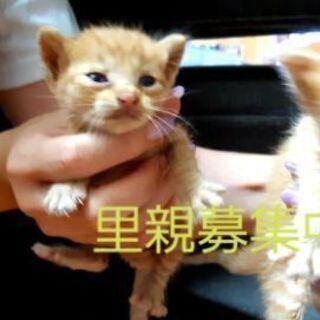 (急募)生後約2~3週間の子猫ちゃん4匹いますの画像