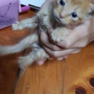 (急募)生後約2~3週間の子猫ちゃん4匹います - 猫