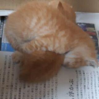 (急募)生後約2~3週間の子猫ちゃん4匹います − 沖縄県