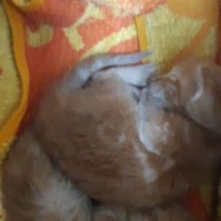 (急募)生後約2~3週間の子猫ちゃん4匹います - 里親募集
