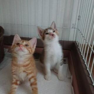 子猫2匹の里親さん募集