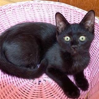お目々ぱっちりの黒猫さんです♪♪