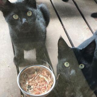 ツヤツヤ黒猫の3兄弟です。 - 北杜市