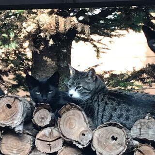 ツヤツヤ黒猫の3兄弟です。 - 猫