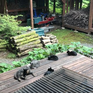 ツヤツヤ黒猫の3兄弟です。 − 山梨県