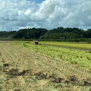 R3年新米取りたて農家直送‼️一等米‼️