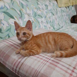 生後4か月過ぎのオスの子猫の画像