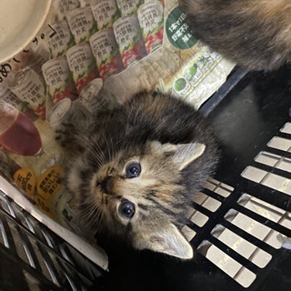 子猫5匹の里親募集してます。