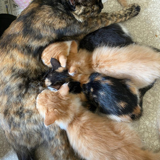 里親募集!5匹の子猫 - 東根市