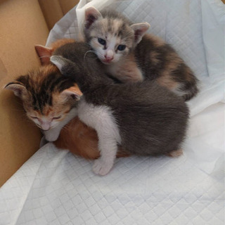【代理投稿】野良さんがガレージで産んだ仔猫達