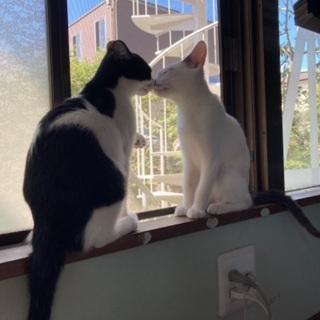 4ヶ月程の子猫2匹9月9日
