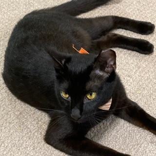 甘えん坊の可愛い黒猫女子