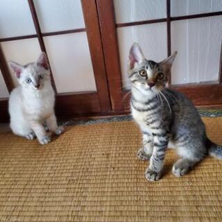 急募!子猫の里親さん募集しています