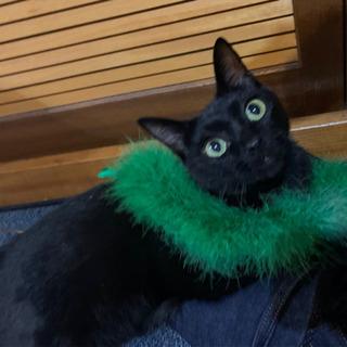 里親募集 黒猫 雄 推定1歳半