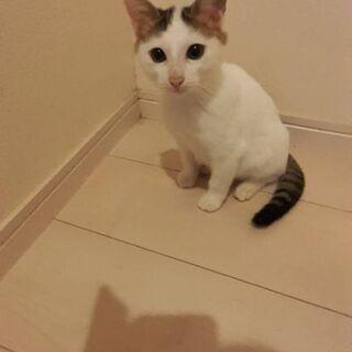 最近もらった子猫 推定3ヶ月